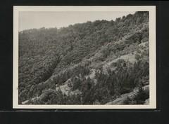 Anglų lietuvių žodynas. Žodis re-afforestation reiškia miško atželdinimo lietuviškai.
