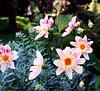 Kilmacurragh (Explored) (murtphillips) Tags: flowers trees landscape october martin phillips wicklow 2009 marian murt explored kilmacurra mygearandme rememberthatmomentlevel1 vigilantphotographersunite