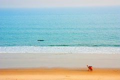 Puri_February_2013_829 (Satyaki Basu) Tags: ocean travel sea india beach canon eos places camel orissa puri bayofbengal 1755 450d gettyimagesmiddleeast
