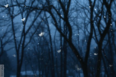 Snowflakes (wmliu) Tags: trees snow snowflakes misc flash flakes multi strobe wmliu