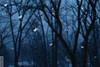 Snowflakes (wmliu) Tags: trees snow snowflakes misc flash flakes multi strobe wmliu