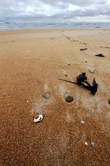 footprints (keith midson) Tags: ocean sky beach clouds sand harbour shell footprints tasmania westcoast trial