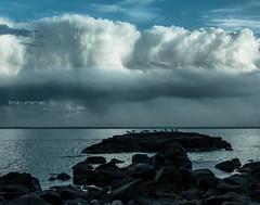Blue Hour Shower (Boreal Bird) Tags: rain gulls lakesuperior hss sliderssunday maryamerman bluehourshower