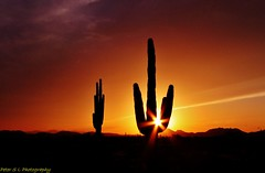 Phoenix Sunset  3 (Photography Peter101) Tags: sunset arizona cactus nature sunrise canon