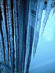 (Osiris Pictorials ) Tags: ice nature water beautiful japan danger frozen seasons freezing icicle akita tohoku hazard iceisnice sharpedges longicicles lethalicicles