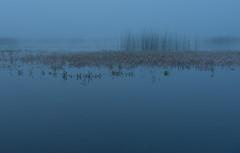Cerknica Lake (happy.apple) Tags: dolenjejezero cerknica slovenia si cerknikojezero cerknicalake slovenija summer morning fog vodnadresen megla jutro poletje geotagged