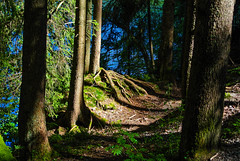 Rund um den Spitzingsee (4) - Around the Spitzingsee (4) (Kat-i) Tags: schliersee bayern bavaria deutschland germany bergsee lake wald forest bume trees wurzeln roots natur nature nikon1v1 kati katharina 2016