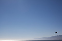 Californian Dreaming (Geraint Rowland Photography) Tags: minimalism minimalistphotography sky skyporn bigblue blue bird flying fly inflight birdinflight santamonica california unitesstatesofamerica gull dream dreaming ocean land sea nature geraintrowlandphotography route66 californiansun mist endless depthoffield travel visitsantamince visitcalifornia travelphotographybygeraintrowland