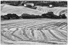 """ Pelo e contropelo "" (pigianca) Tags: italy caspreno castelnuovoberardenga cretesenesi monochrome blackwhite bw landscape fujixt1 elmarc90mmf4"