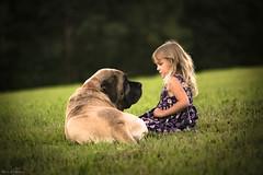 Pure love... (Marla Nutbrown) Tags: dog english mastiff girl love