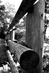 Rail Fence (Jade Chanoquaway) Tags: nikon nikkor d5500 blackandwhite black white bw shadow light contrast wood fence tree trees outside outdoor outdoors forest railing rail texture shadows park canada ontario grey gray grayscale greyscale monochrome silhouette cans2s