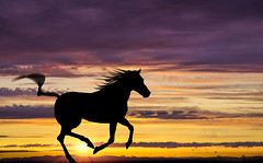 Silhouette 013 - Galloping Horse at Sunset (IP Maesstro) Tags: gallop horse nature wild sunset sunrise silhouette ipmaesstro hdr