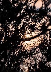 _DO14895 (Edoardo Marino) Tags: palos pv palosverdes san pedro california sunset park ocean sun light outdoor shoot people silhouette tamron tamron85 85mm nikon nikkor 20mm wideangle lightroom edoardomarino marinoedoardo dodi d810 birds sky clouds beauty colors
