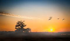 weiche Farben (O.I.S.) Tags: hsfarben himmel sky enten ducks vgel birds sunset sunrise sonne sun baum tree hiller moor torfmoor nebel fog dunst mist ps photoshop orange