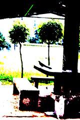 DSC01973 (EsKarenLop) Tags: parque color contraste park contrast ave bird filtro filter