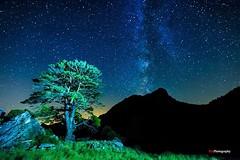 AEVITERNAL (Kiu Photography) Tags: night stars nocturna vialactea milkyeay kiuphotography kiu nightphotography nightscape pals pauls montsagre arbol tree