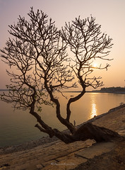 The tree by the river (Utpalendra Kumar Deka) Tags: swalkucki assam india northeastindia d7200 nikon tokina 1116mm landscape photography sunset silk winter river brahmaputra