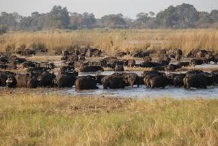 Namibia Dangerous Game Safari - Caprivi Strip 28