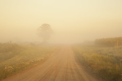 Gravel Road on a Foggy Morning (kevin kludy) Tags: fog foggy atmospheric mist misty road rural countrycountryside morning michigan usa peaceful quiet tranquil