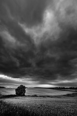 2016-08-30 01-099 (Iain Spowart) Tags: clouds doune tree