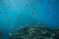 20160903-DSC_4857.jpg (d3_plus) Tags:  southizu drive fish marinesports apnea 1030mm zoomlense sea j4 underwater nikon1   watersports wpn3  japan  nikon   izu nikkor sky  nikon1j4 nikonwpn3 scenery  snorkeling 1  port diving   skindiving 1030mmpd   1nikkorvr1030mmf3556pdzoom waterproofcase