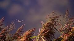 Les herbes Folles (Yasmine Hens) Tags: hensyasmine namur belgium wallonie europa aaa belgi belgia europe belgien  belgique blgica   belgie  belgio    bel be