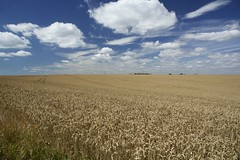 8th August 2016 (EmmaDurnford) Tags: sky clouds st field summer cliff wheat harvest kent margarets