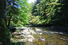 Wanderung An Der Ilz (ivlys) Tags: germany allemagne deutschland bayern ilz fluss river landschaft landscape nature ivlys
