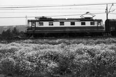 koda 19 (railwaymagic) Tags: koda sd 182 poprad tatry