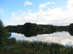 22/9/2016, 266/365, Lake view IMG_7276 (tomylees) Tags: thursday 22nd september 2016 project 365 pattingham shropshire