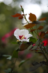 Flower - Sigma 50mm F1.4 - 5D Mark IV (abysal_guardian) Tags: canon eos 5dmarkiv 5dm4 5d mark iv 5d4 sigma50mmf14exdghsm sigma 50mm ex dg hsm f14 flower dof outdoor 5dmk4