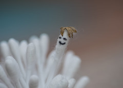 Hi there! (Y*Y Photography) Tags: macro cute cotton qtips buds swabs bokeh dof white pink blue
