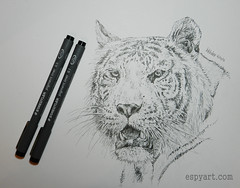 White Tiger (Espy Art) Tags: tiger animal wildlife bigcat cat whitetiger art drawing pen ink blackandwhite portrait sketch