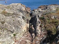 2016 09 19 Cattle Point_0029 (Blake Handley) Tags: blake blamar cattlepoint oakbay victoria bc britishcolumbia vancouverisland canada dogs ocean shoreline beardedcollie beardie