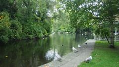 P1010835 (J. Prat) Tags: stephen green park