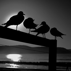 Beachside Silhouettes: Umina Beach Central Coast NSW Australia (Kangaroobie... .home) Tags: seagulls beach sunrise australia poses umina uminabeach centralcoastnsw morningpose bwphotorgaphy