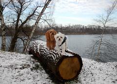 Winterwandeling (~~Nelly~~) Tags: winter snow belgium belgique hiver sneeuw belgi dina neige hofstade zino