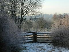 Tynehead Park, British Columbia (careth@2012) Tags: winter snow britishcolumbia amazingnature nikonflickraward chariotsofnaturelevel1