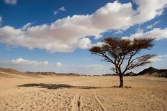 Verloren in der Wste (Devil_of_Tora) Tags: tree nature beautiful landscape lost amazing sand loneliness desert sony awesome natur egypt sigma arab lonely alpha landschaft baum einsamkeit gypten wste einsam verloren arabien 17mm wunderschn sigma1770 sonyalpha500