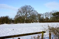 Snow around Euxton (Rovers number 9) Tags: uk trees winter england snow minolta sony lancashire chorley a65 euxton minoltaaf28135mmf445 sonya65