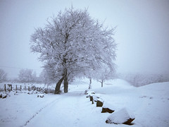 SNOW BLINDING (kenny barker) Tags: winter snow tree landscape 20mm falkirk bonnybridge f17 olympusep1 kennybarker