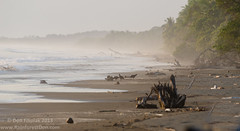 DLF_6512 (Don Filipiak) Tags: beach nature costarica baru cheloniamydas herps dominical greenseaturtle multiflash herping herpphotography nikonwideangle nikond7000 nikon1024mm nikonwildlife nikonsb700