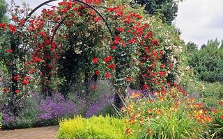 Royal National Rose Society Gardens - RNRS - T...