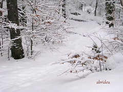Snow in the Forest (abrideu) Tags: winter snow forest canon ngc abrideu fleursetpaysages