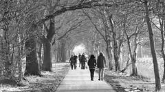 Mede wandelaars / Fellow hikers (andzwe) Tags: meppel berggierslanden nederland netherlands dutch drenthe dutchlandscape wandelen wandelaars landweg hikers hiking walking people sunny zonnig winter wintry sneeuw snow andzwe bomenhaag kaal ©andzwe panasoniclumixdmcfz50 © copyright panasonicdmcfz50 fz50 drente baretrees