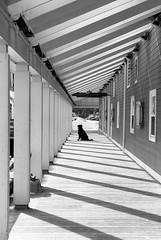 waiting (Julie Hawkes) Tags: dog film kodak elan halifax tmax100 thelittledoglaughed canon247028