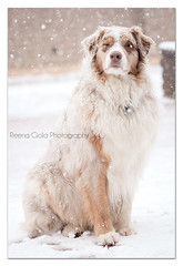 This was just too funny...he closed the one eye cause snow went in it! (Boomer's Mama) Tags: snow olivia anthony snowing boomer snowprincess 52weeksfordogs february2013