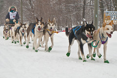 UP 200 sled dog race (Gary of the North(Footsore Fotography)) Tags: winter michigan northernmichigan absolutemichigan sleddograce up200 amazingmich grandmaraismichigan