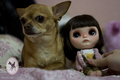 Yuki & Cocoa (-Poison Girl-) Tags: dog brown chihuahua eye girl mouth dark hair nose eyes doll dolls cut chocolate carving sleepy yuki short blythe freckles poison custom cocoa simply takara licca poisongirl customs correction scalp etes blythes eyechips simplychocolate philtrum blythecustom rechipped eyelashesgaze