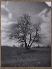 (abdukted1456) Tags: park winter red blackandwhite ny newyork tree film polaroid war saratoga shift battle historic filter national 4x5 battlefield stillwater expired tilt 54 graflex 545 type54 expiredfilm crowngraphic 4x5camera instantfilm 25a peelapart sheetfilm polaroid545 ektar127mm